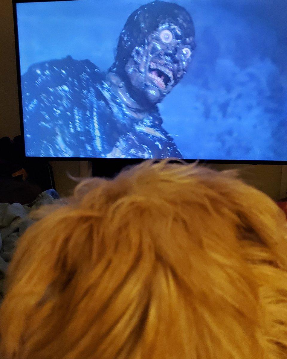 Day 18 #returnofthelivingdead2 #kenwiederhorn #dogswatchinghorror #horrorfilm #furderino #doggy #horrorfan4life #horrornerd #horrorgeek #dogslife #doggo #horrorfans #horrorclub #horrorlover #dogs #horrorfamily #zombiefilm #love #80shorrormovies #80shorror #zombies #horrorcomedypic.twitter.com/JafTHU7vzW