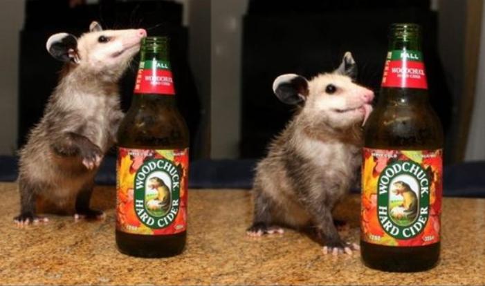 Possum Every Hour (@PossumEveryHour) on Twitter photo 19/02/2020 03:02:28