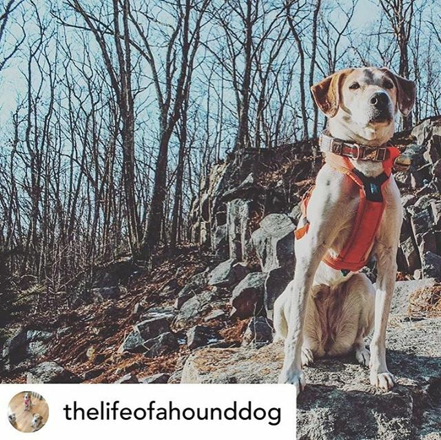 Love this adventure shot from @thelifeofahounddog #optoutside #adventurepup #dogstagram #dogsofinstagram https://ift.tt/2SCGtbApic.twitter.com/5RcCGfRCO3