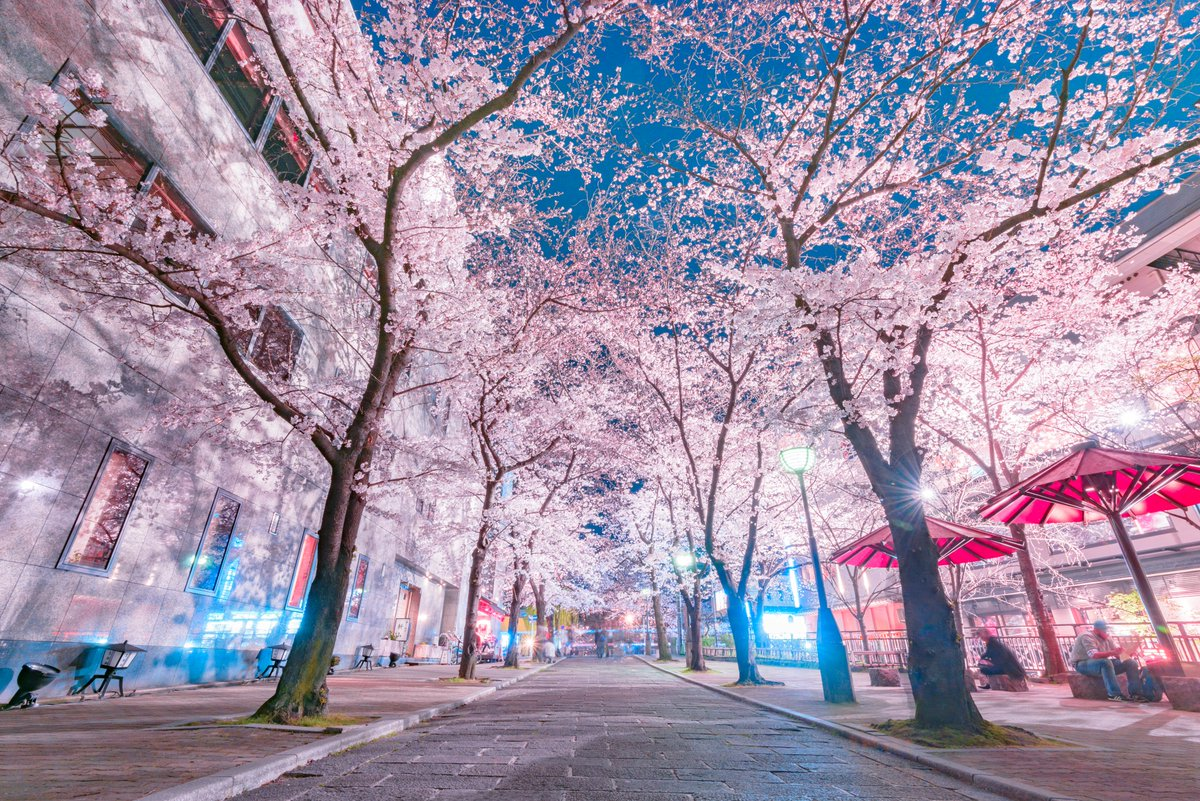 京都の夜桜が大好きです。#これを見た人はピンク色の画像を貼れ