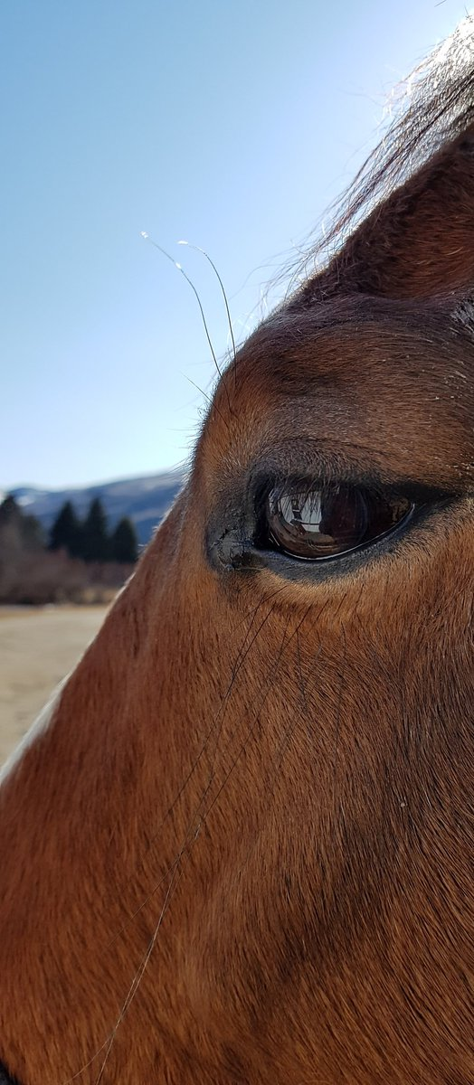 My mare Miracle enjoying some sunshine and a visit with me today. #OliverBC pic.twitter.com/iXIdLy3A6y