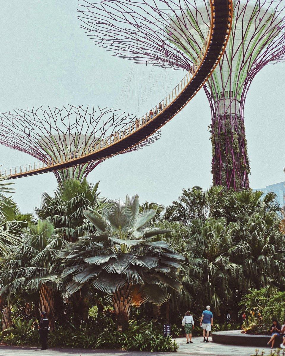 En la zona de Gardens by the Bay en Singapur encontramos esta colección de 18 arboles, entre los 25 y 50 metros de altura crean un telón de fondo increíble para el distrito central de negocios de la ciudad de Singapur. #lakutravel #yoviajoconlaku #singapur #gardensbythebay