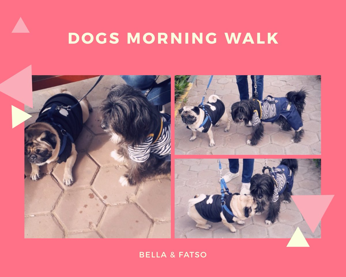 Bella and Fatso enjoying a Walk in  the morning sun at the Park 🌞🐱🐶🥰 #Dogswalk #Bella #Fatso #Dog #Dogs #Doglovers #Doglover #ilovedogs #MyDogs #MyKids #morningsun #morningwalk