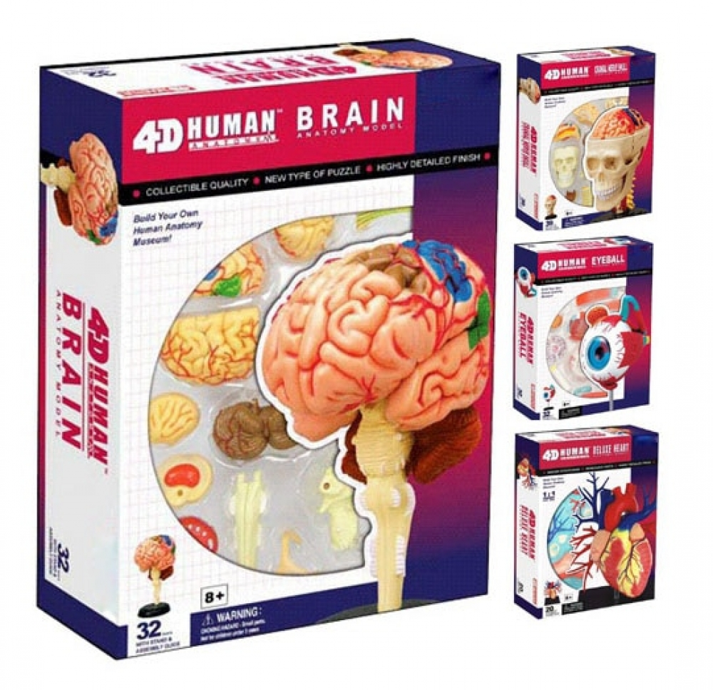 #phone #onlineshop BOHS Human Anatomy Educational Puzzlepic.twitter.com/R0IeiUF6Rk
