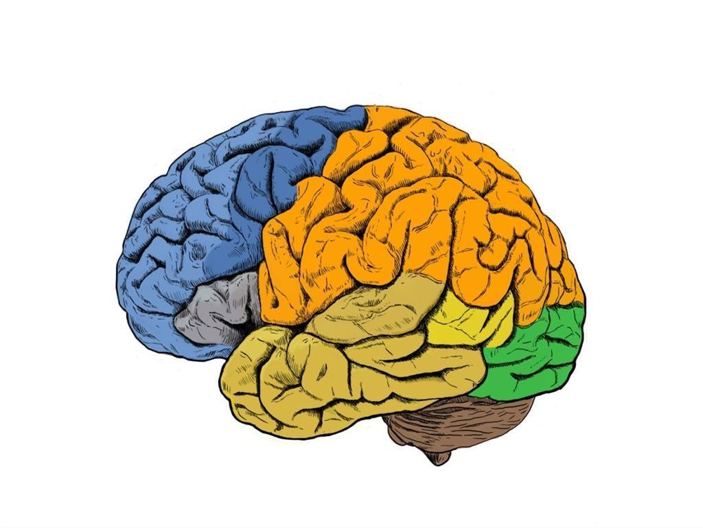 """Las neuronas controlan el movimiento """"conversando"""" entre ellas  #psicoprofesional #neuropsicologia"""