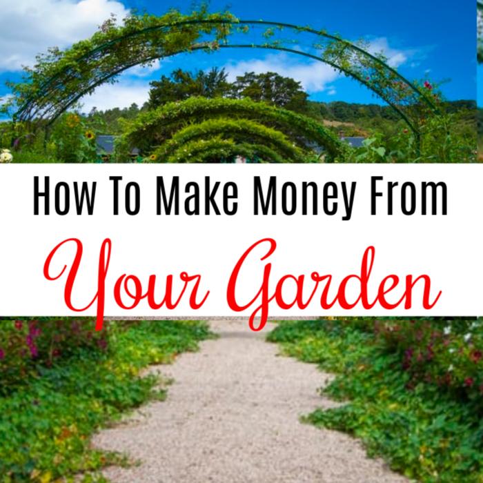 How To Make Money From Your Garden https://dianfarmer.com/how-to-make-money-from-your-garden/… #homegrown #gardeninggoals #gardentotable #instaplants #sustainablesprout #urbanfarming #gardening #containergardening #organicgardener gardening #plantlovepic.twitter.com/WmS4OqzyHw