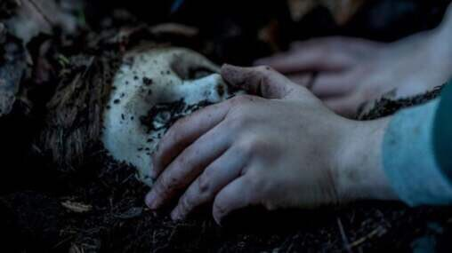 [Video] Brahms Causes a Grisly Fall in New Clip from BRAHMS: THE BOY II!   Watch it here: https://www.killerhorrorcritic.com/reviewsnews/brahms-causes-a-grisly-fall-in-new-clip-from-brahms-the-boy-ii… #BrahmsTheBoyII #BrahmsTheBoy2