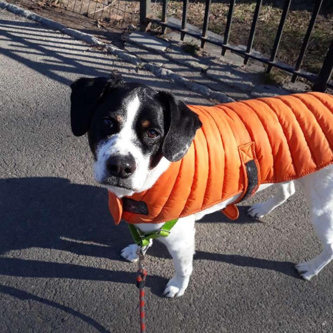 Beo wishes you a happy end of the day! #mixedbreedpup #maythepawsbewithyou #lukedogwalker #dogwalkeruws #happydog #uws #doggy #doggo #furbaby #dogcity  #puppy #puppylover #ilovedogs #sweet #whatabeauty #nycitydog #sweetdoggo #endoftheday #cutedog #cutepic #dogsofinstagrampic.twitter.com/9G5ReBjyO2