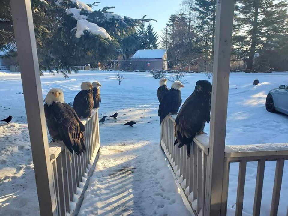 just an average winter day in Decorah, Iowa