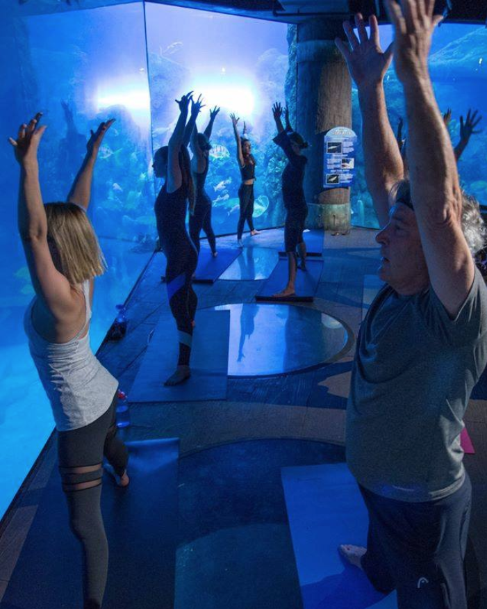 Our next Yoga with the Sharks session is this Saturday!  Be sure to purchase your tickets while there is still room! ‍  - - #yoga #yogawiththesharks #sharks #aquariumdenver #denver #denveraquarium #downtownaquarium #visitcolorado #denvercolorado #aquariumlife #denverlifepic.twitter.com/T48z4GaiVD