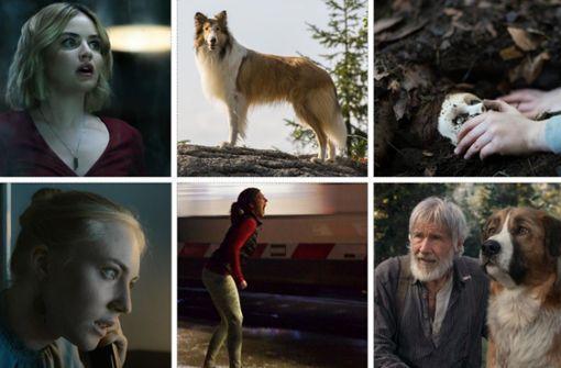 Kinostarts der Woche: Gute Hunde, böse Inseln und mutige Goldsucher http://bit.ly/38IAZSapic.twitter.com/vjOAeB2yjl