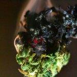 Image for the Tweet beginning: #marijuana #cannabis #cannabiscommunity-  Joining a growing