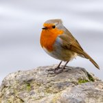 Image for the Tweet beginning: Final few Figgate shots. Robin