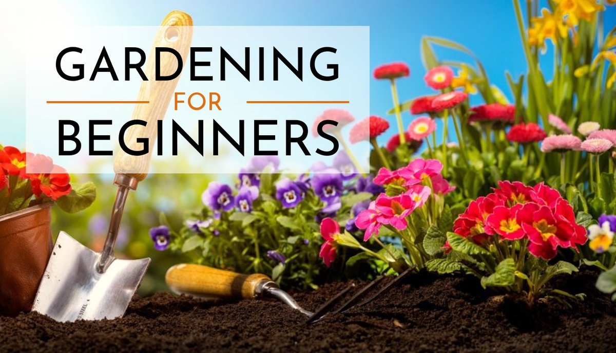 Get my course Gardening on a budget completely free for 2 months when using my link, then enjoy access to thousands of other great videos.    @SkillShare #learn #learning #class #classes #teach #plants #howto #gardening via