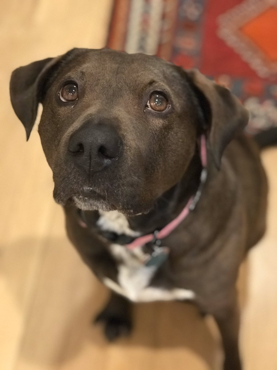 All the Valentine's Day candy is 70% off so here is my 70% off Valentine's wish for each of you: find someone who looks at you like my girl coco looks at treats #DogsofTwittter #rescuepup #doggolove @dog_feelings @dog_ratespic.twitter.com/VqgYCSbMwt
