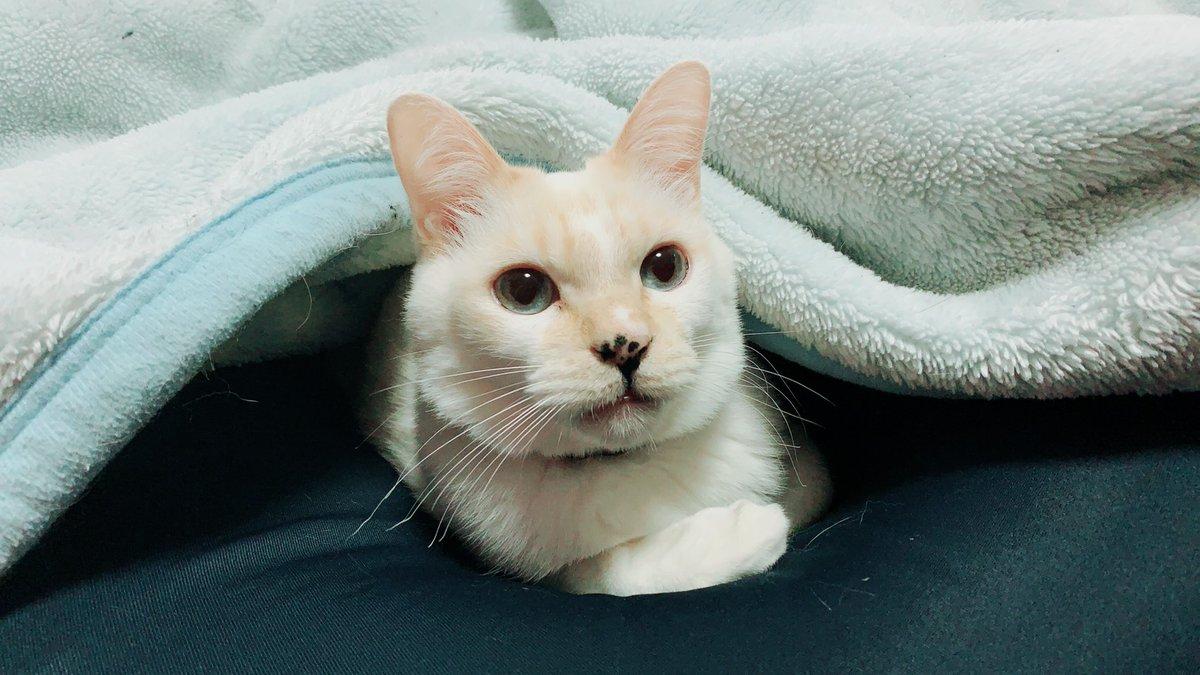 クッションに毛布のマロウ君朝からチョット羨ましかったりする小生がしたらブーイング確実(笑)ネコって特別なんですね今日の話は【肩が痛くて挙がらない】スノーボードで転倒された方の肩の痛みの回復  ↓   ↓   ↓ #ねこ #肩の痛み #スノーボード
