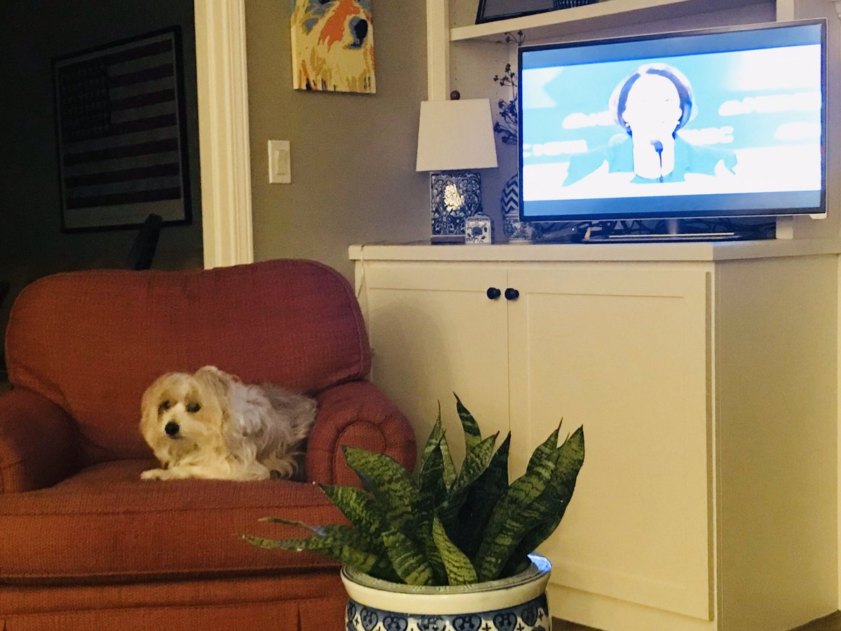 Harry is listening. #debatedogs @scottdetrow
