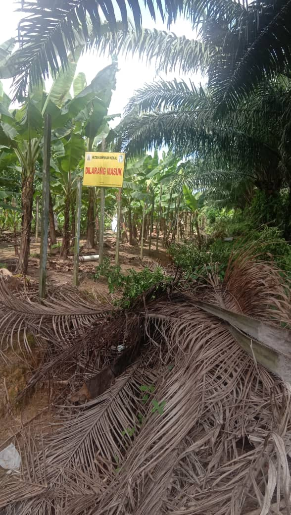 Seriously? Suddenly community in my village now living inside forest reserve? We are now pendatang is it? WTF!  #landrightsnow #HumanRights #orangasli #selangor #landrights<br>http://pic.twitter.com/Drl2ArgLHt