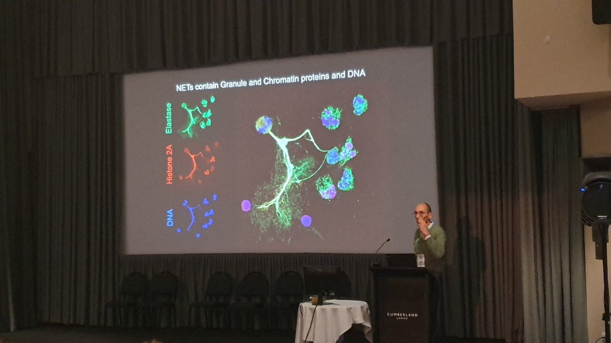 'Histones are one of the most primitive antimicrobial'  Absolutely blown away from plenary speaker, Arturo Zychlinsky, who discovered NET formation: The extrusion of histones/DNA/elastase and more into net-like structures by neutrophils, to capture and kill microbes!! @The_VIINpic.twitter.com/wcVZ4C8jHD