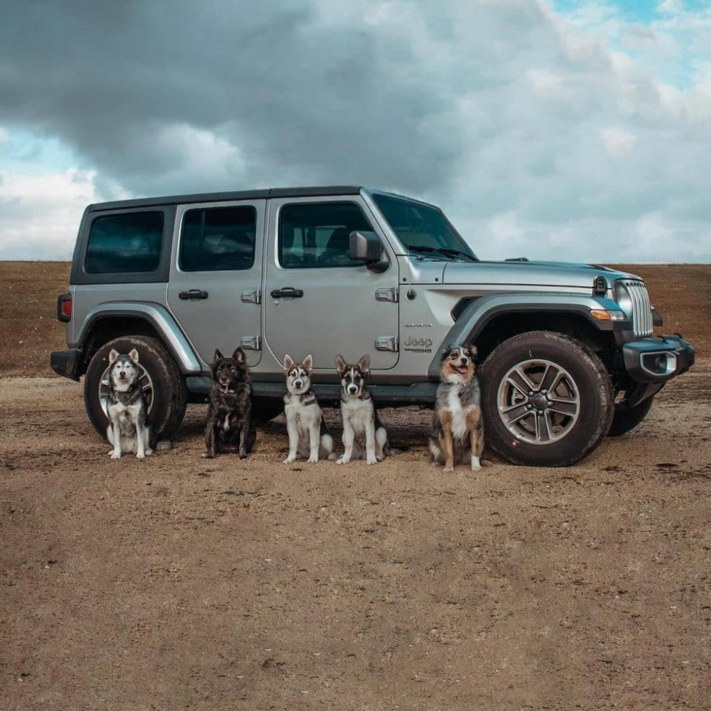 Your best friends deserve the best adventures too.  #NationalLoveYourPetDay #Jeep #Wrangler #JeepWrangler  📸 theorlandowolfpack