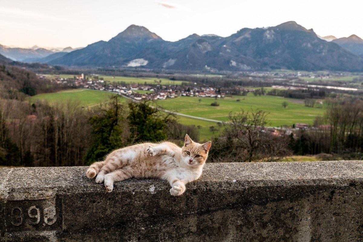 Einen besonderen Aussichtsplatz hat sich die Katze Simba auf dem Hof der Familie Weyerer in Hintersteinberg auf dem Samerberg ausgesucht.  #Chiemgau #Samerberg https://www.samerbergernachrichten.de/samerberger-katzen-wohlfuehl-dasein/…pic.twitter.com/D7HOnb7Guv