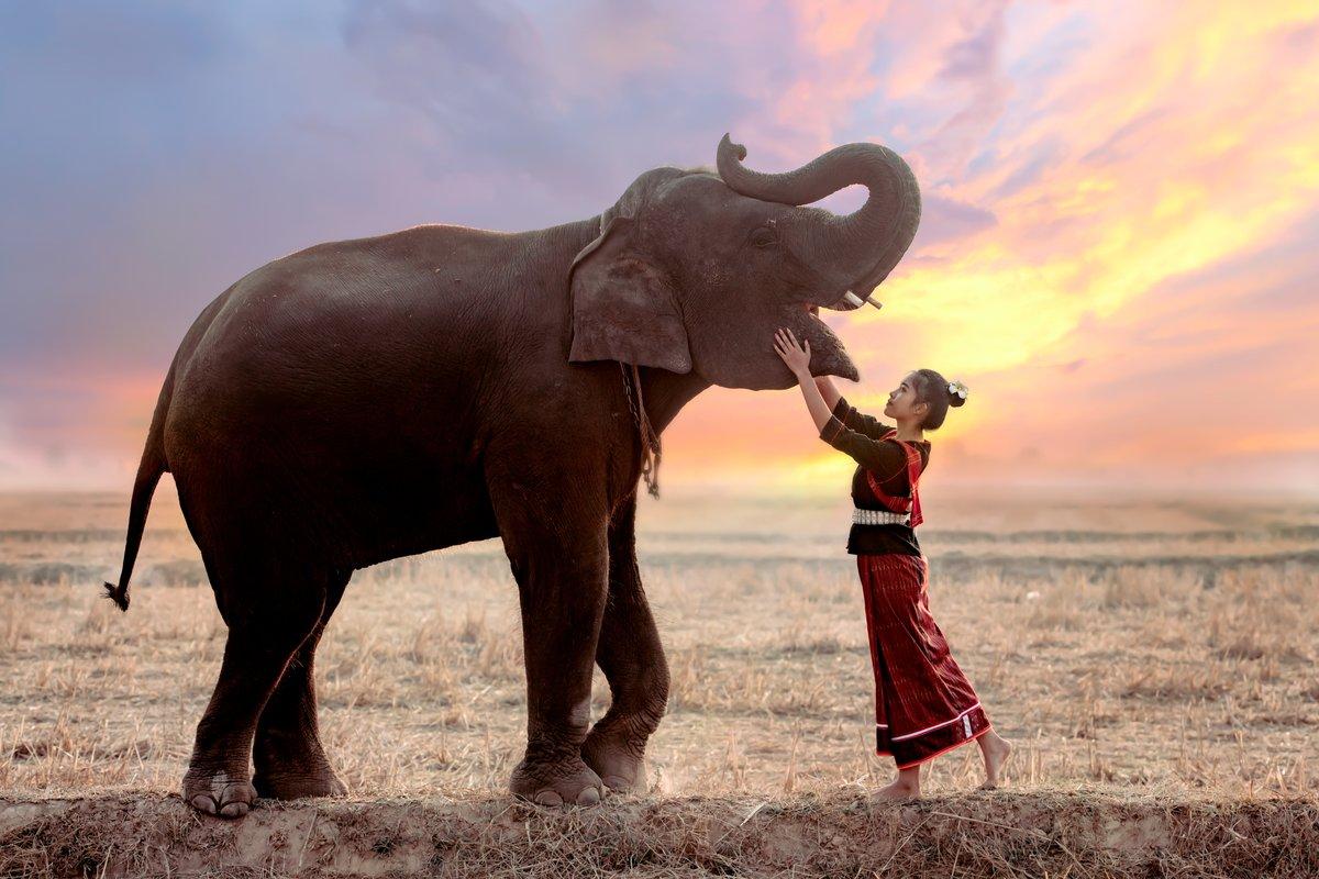 Portrait of Thai girl In traditional folk costumes Playing with elephants in rice fields. #Thailand #Thaielephants #shutterstock #elephantspic.twitter.com/QsaZugU2Pk