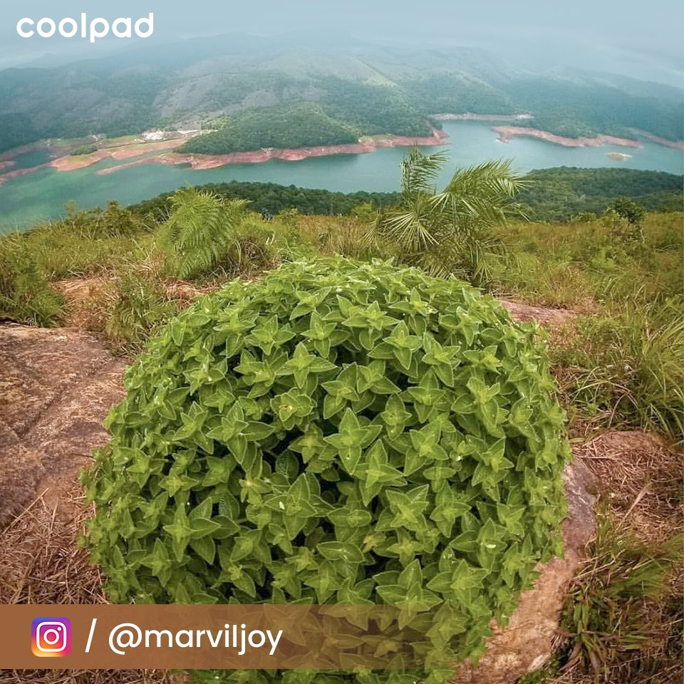 """Watch this scenic view of #Munnar ; one of the fabulous destinations in #Kerala captured by """"marviljoy"""". Share your #Photography & get a chance to feature here. #KeralaTourism #exploreidukki #KeralaDiaries #ShotOnCoolpad #DesignedForAllpic.twitter.com/HYdnwqoQ5y"""