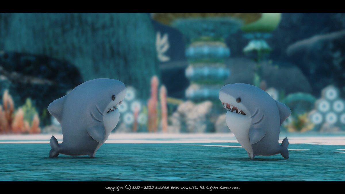 サメちゃん可愛すぎてずっと連れてる