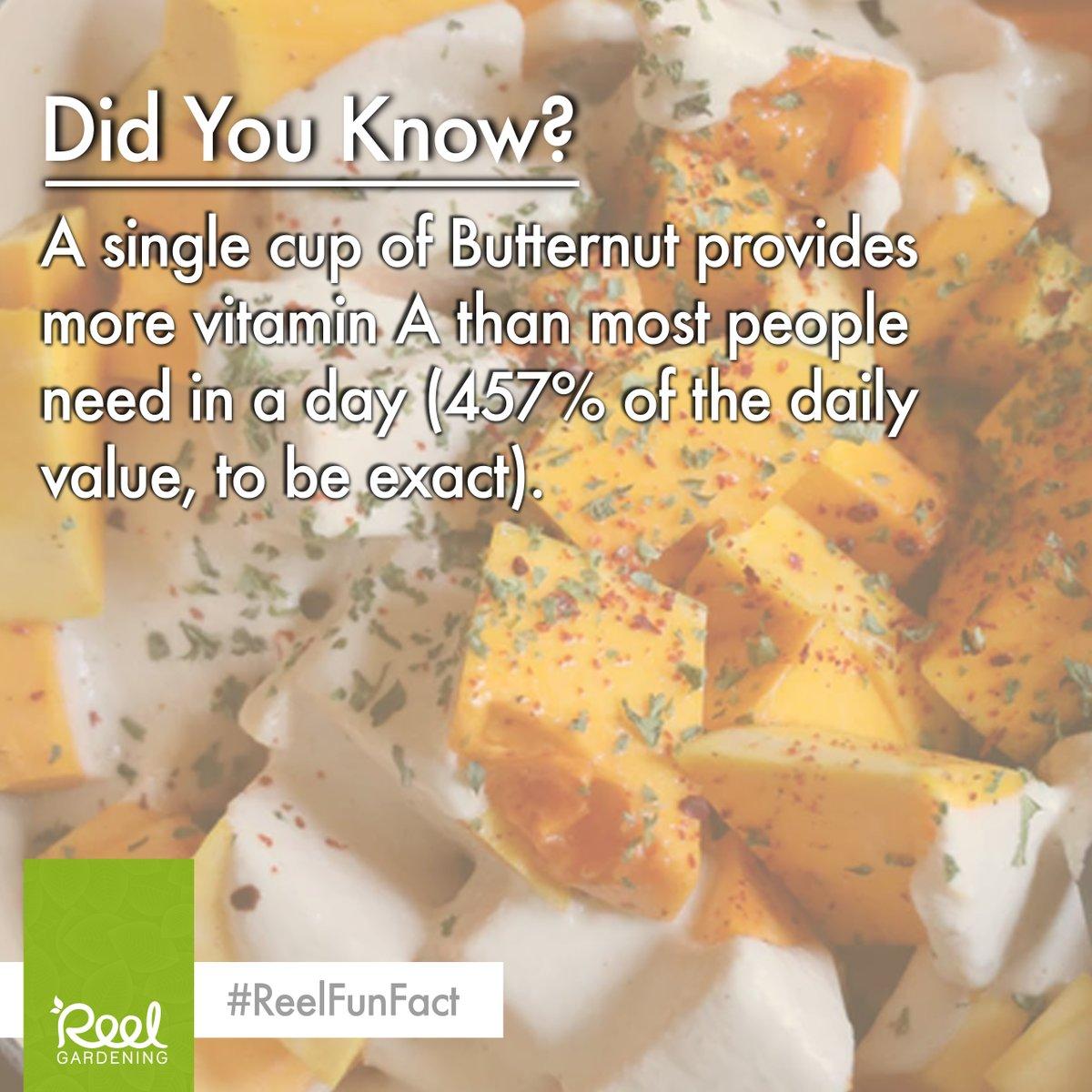 Did you know....  #butternut  #vitaminA  #vegetablegarden  #nutrition   #dailyintake  #gardening  #growyourown  #edible  #vegetable  #fruit  #vegetables  #plants  #plantbased  #food  #fact  #ReelFunFact   This fun fact was found on: https://foodandhealth.com/8-fun-facts-about-squash/  …