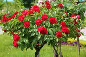 Thorns and roses grow on the same tree. Rose never propagandize its fragrant, but its own fragrance spreads surrounding. The world is a rose, smell it, and pass it to your friends. Life Is Beautiful And Yet Life Is Not A Bed Of Roses. #truthoflife #kabhikhushikabhigam #spreadlovepic.twitter.com/2p4PgDMIKi