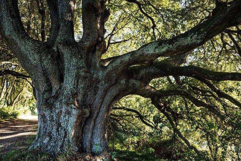 Qui vit dans le chêne ? http://dlvr.it/RQPWpr