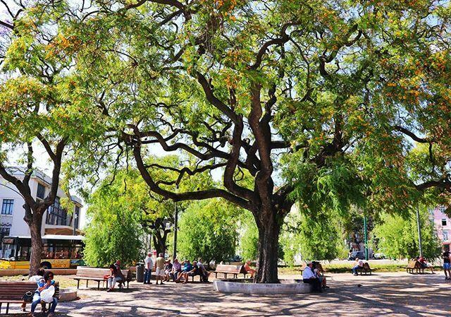 Magical tree ∆ ∆ ∆ #tree #arbre #parc #square #instatravel #estheticlabel #exploretocreate  #justgoshoot  #illgrammers #travel #travelingram #lisbonportugal #living_europe #igportugal #lisbonne #lisboalovers #aroundtheworld #teamcanon #super_portugal #igersportugal #lisbonwo…pic.twitter.com/plMkhTX5rl