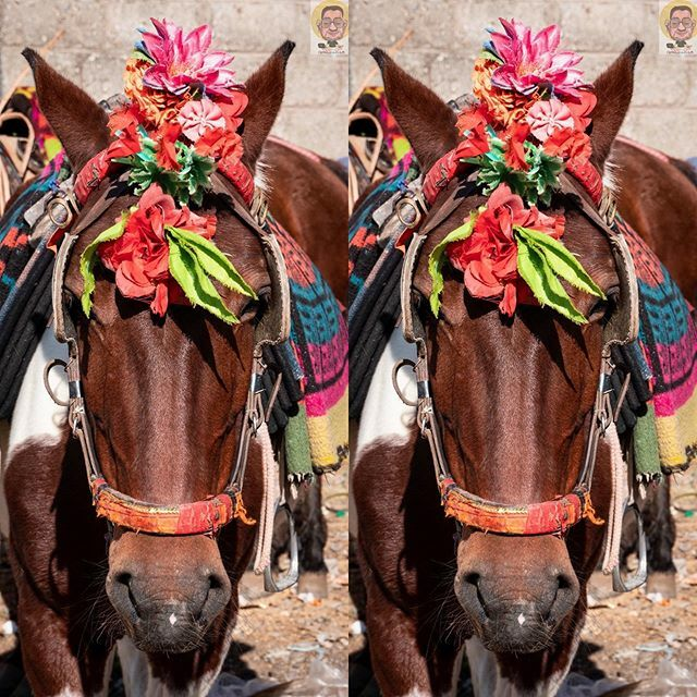 Horse portrait or animal portrait? 🤔  #shivkhodi #horse #horses #portrait #animalportrait #portraitphotography #horseportrait #animal #animals #animalphotography #jnk #jammukashmir #jammuandkashmir #horseriding #horseride
