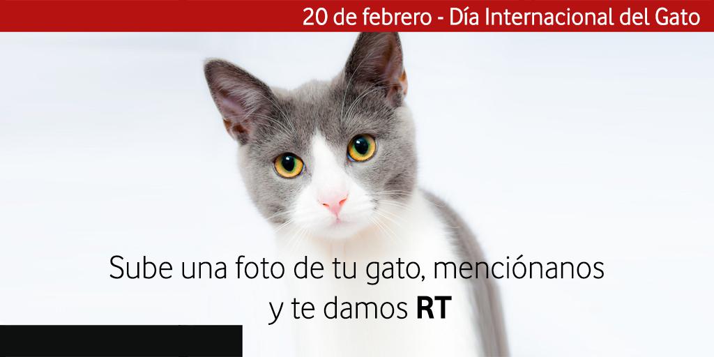 ¡¡Feliz día internacional del #gato!! Menciónanos en las fotos de tu compañero gatuno y te damos #rt. #diainternacionaldelgato #cat #cats #gatos #chat #socks