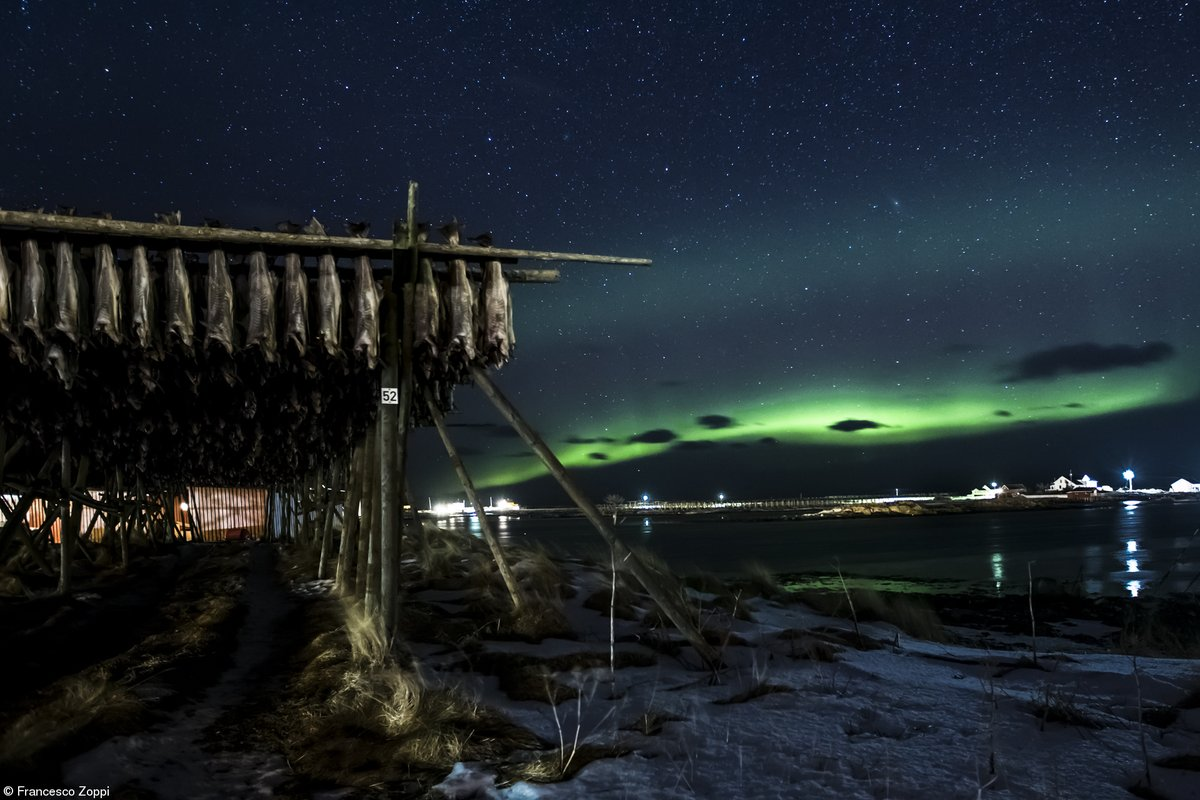 Now this is kind of special. Highly Commended Food in the Field © @francesco_zoppi_photography ,Italy Stockfish Under The Northern Lights #northernlights #travelphotography #lookup #skyline #foodphotographtpic.twitter.com/9Mdatu2Uew