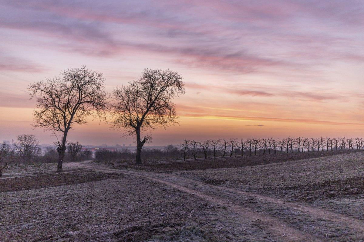 #sonnenaufgang #landschaftsfotografie #rheinhessen #rheinlandpfalz #mainz #wintermorgenpic.twitter.com/dkw001gkq5