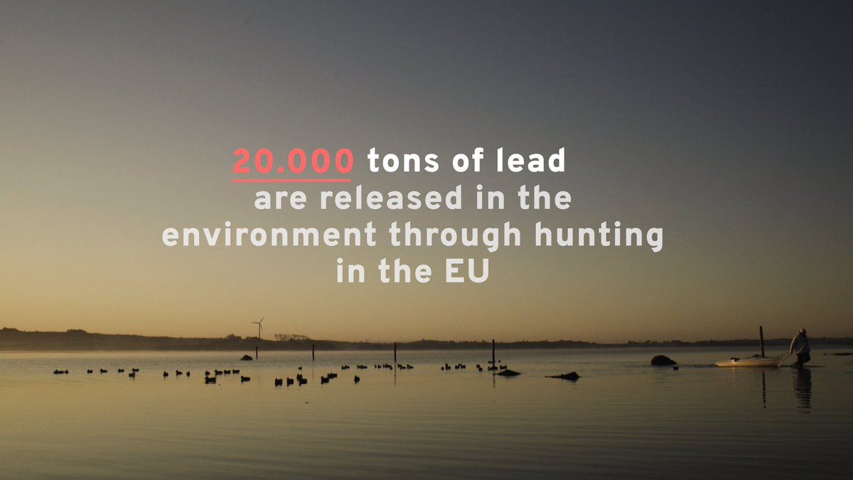 The EU wants to ban lead shots in wetlands ASAP. Lead - poisonous to people, wildlife & nature - kills over 1 million waterbirds in the EU every year. @FACEforHunters however isn't too keen on removing this toxic substance from our environment ASAP...