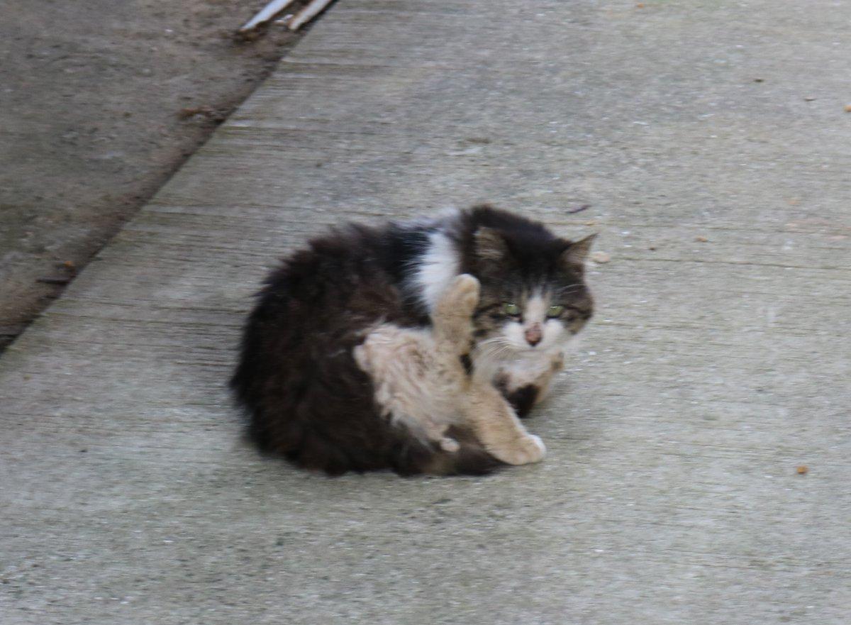 独りぼっちの猫「幸」(さち)です。他の猫からいじめられることがあります。人間不信の猫で、人間の姿を見ると、すぐに逃げていきます。詳しい話はブログに掲載してます。ブログをご覧になってください。
