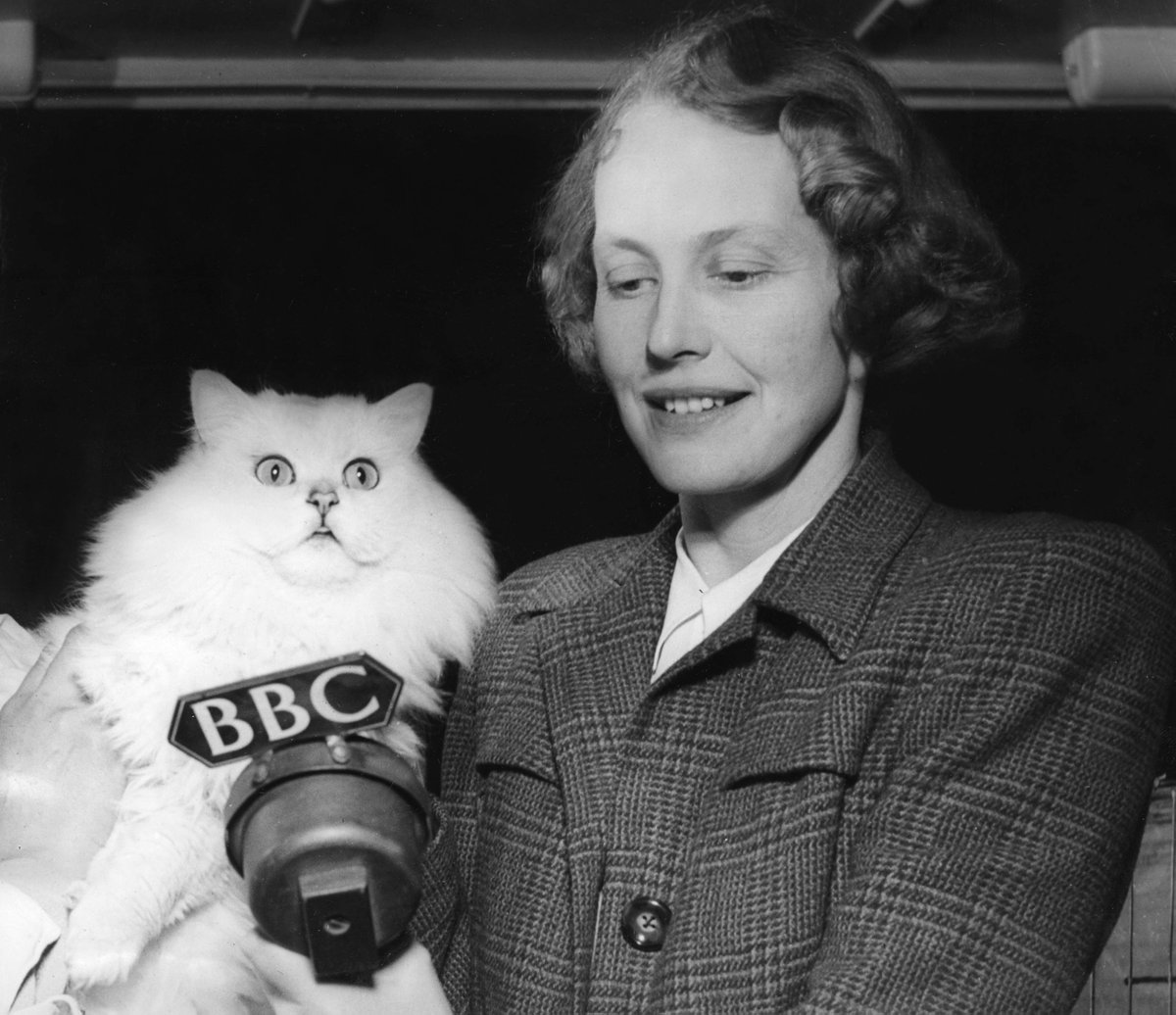 Throwback to when these cats appeared on @BBCWomansHour. 🐱🎙️Timothy of Knott Hall, a Blue Longhair Persian, winner of the 1948 Championship All-Breed Cat Show (right).And Chinchilla Langherne Winsome, a six times champion (left).#LoveYourPetDay