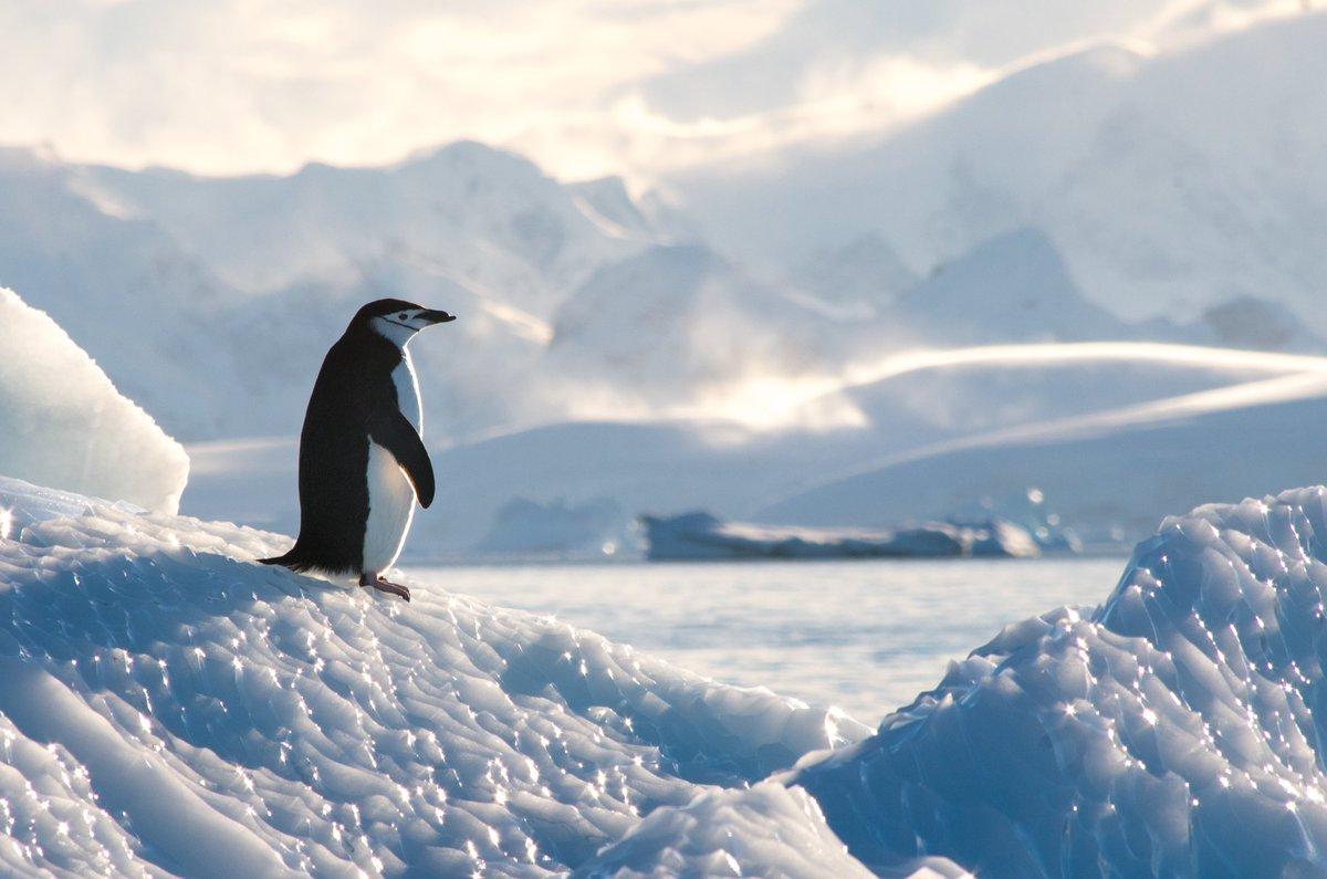Schon mal in der Antarktis gewesen? Die Eislandschaft ist so fremd wie einzigartig. Mit einem Job an Bord der Expeditions Schiffe von Hapag-Lloyd kannst auch Du das live erleben! @backupjobs #happaglloyd #Antarktis #seachefs #job #kreuzfahrtpic.twitter.com/cGDsS9s0K9