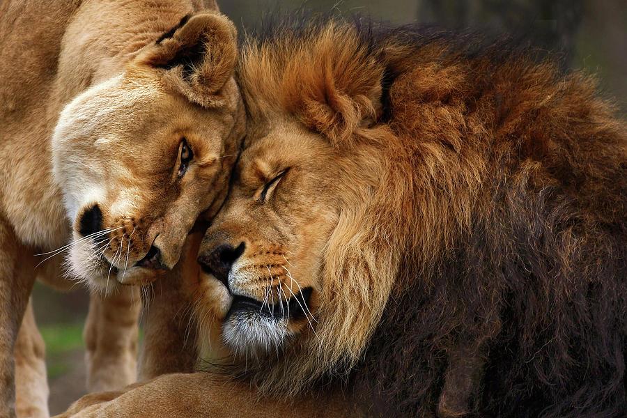 """""""El #amor es invisible y entra y sale por donde quiere sin que nadie le pida cuenta de sus hechos"""". - Miguel de Cervantes - #FelizSanValentin #SanValentin"""