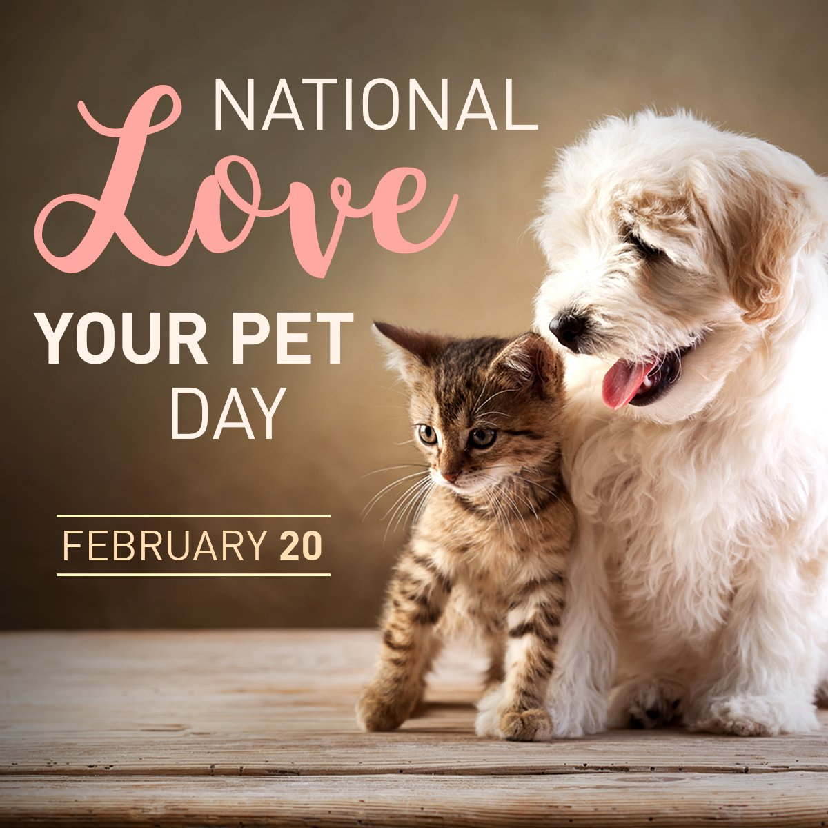 Happy National Love Your Pet Day! Show your #love by sharing your #Pet pictures with us.  #PCSPCA #Pawsitivity #Dogs #Cats #PassaicCounty 🐶🐱❤️🐾 https://t.co/LQ7VlEvuBJ