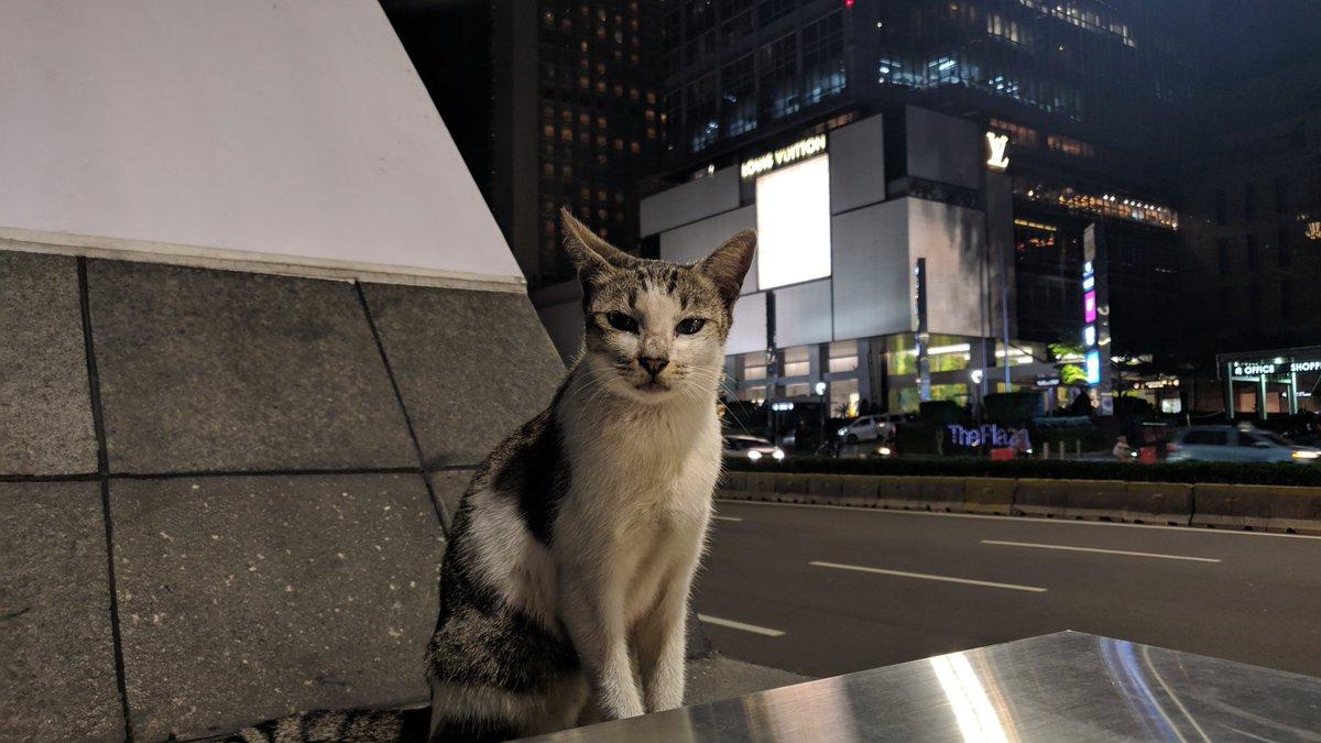 Kucing metropolitan