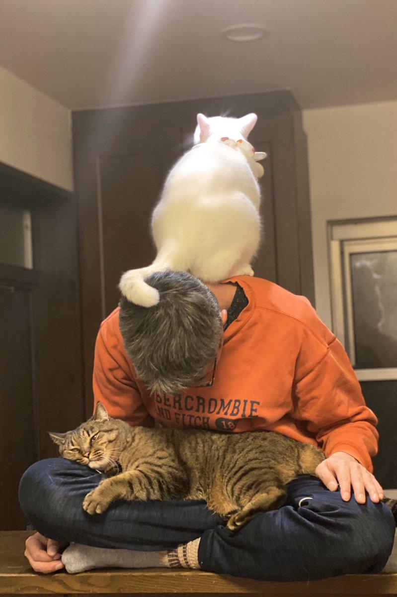 主人が猫仙人のようになってた。