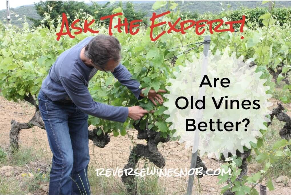 Replying to @cono_sur: Oldie, but goldie. -> Do Old Vines Make Better #Wine?  via @ReverseWineSnob