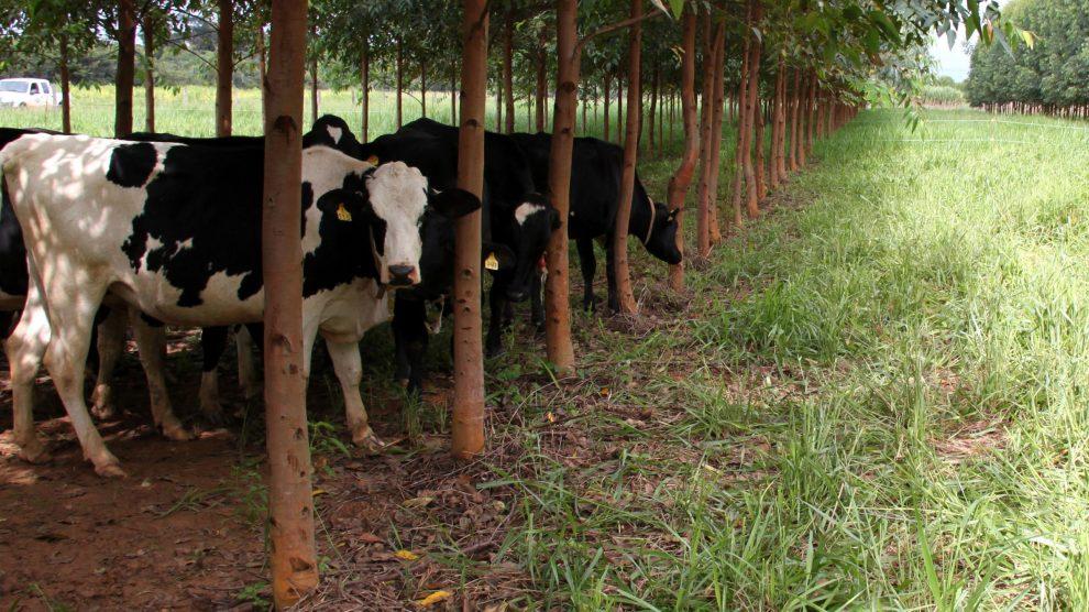 Estudos garantem que sistemas agropecuários integrados melhoram em até cinco vezes a produtividade de carne. Saiba mais: https://www.facebook.com/NorteAgroTO/photos/a.1000295639985934/3178875688794574/?type=3&theater… ou  https://www.norteagropecuario.com.br/noticias/integracao-beneficia-pecuarista/… #NorteAgroTO #agronegócio #agropecuária #pecuária #ILPF #pecuáriadecorte #qualidadedacarne #carnebovinapic.twitter.com/VaXl7B5riS