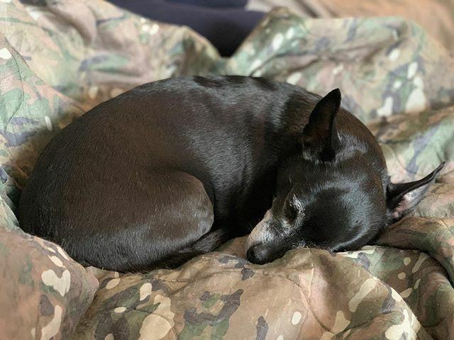 all about that #woobie life  . . #rufflife #dogsofinstagram #rescuedog #loveofmylife #tiny #sassyAF #rltw #rwltw #suasponte #armyrangers #milspouse #thelewnitedstates #blogger https://ift.tt/39RGjmwpic.twitter.com/A9Zmylsooo