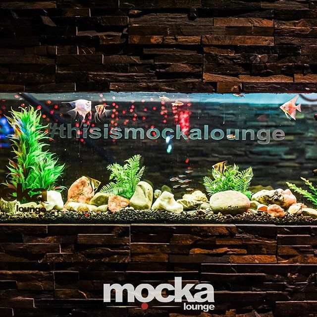 The most famous fish in Cardiff. There's some new additions to the Mocka team and we need some names.  Help us out and comment below #mockalounge #cardiff #cocktailbar #cardiffcocktails https://ift.tt/38Puxc4 pic.twitter.com/rvJUif60Sf