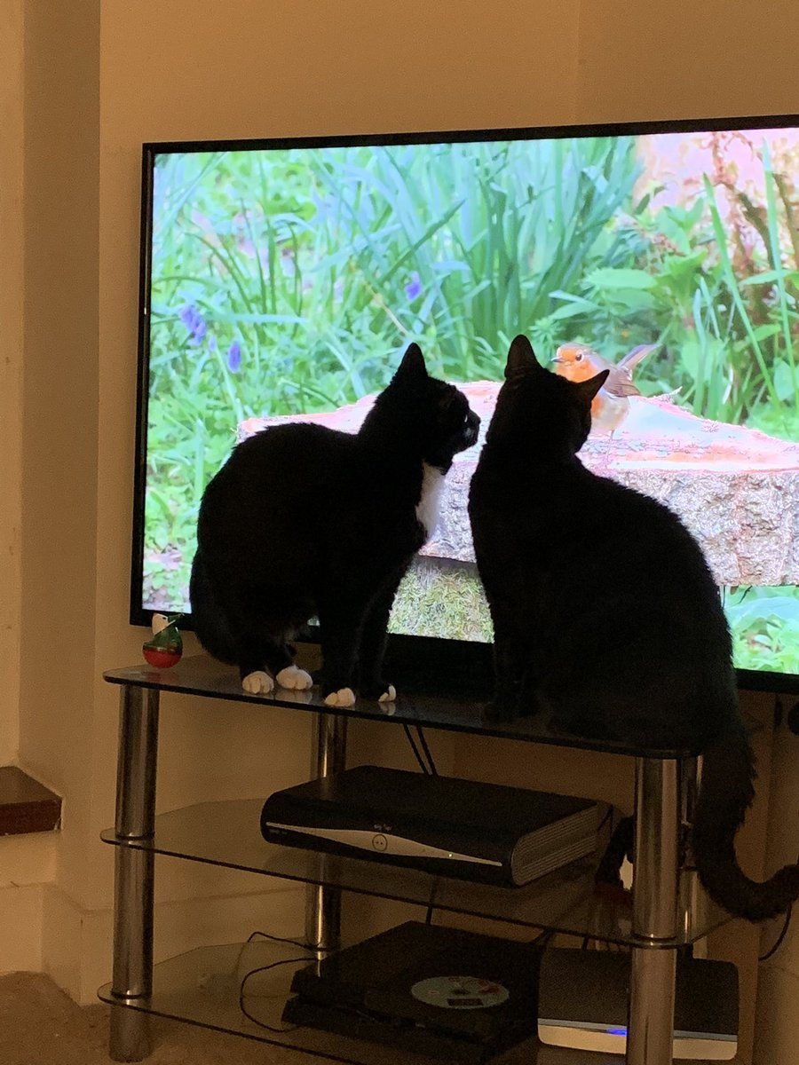 Cat TV 📺 #CatsOfTwitter #catsofinstagram #CatsMovie #catstagram