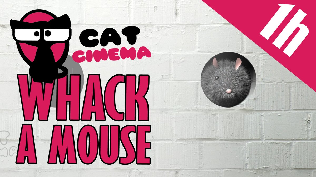 🐱The 1h version of our Whack a Mouse animation! Put your cat in the front of the screen and let the fun begin🐱 youtube.com/watch?v=Nyi9Ea… #catcinema #cats #CatsMovie #CatsOfTwitter